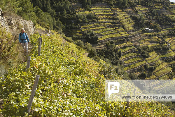 Italy  Liguria  Corniglia  Woman hiking on vineyards