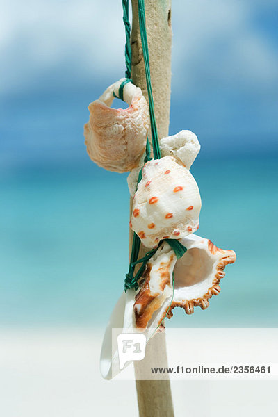 Seashells gebunden um zu bleiben  Nahaufnahme