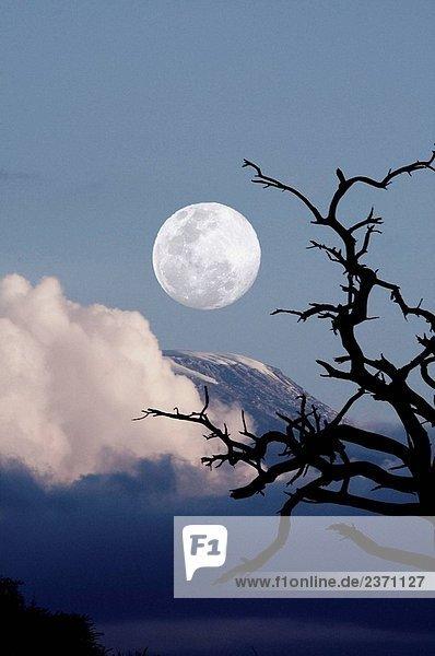 Sunset Landschaft mit Bäumen und Kilimandscharo-Massiv im Hintergrund. Mond als Foto Composite hinzugefügt. Amboseli-Nationalpark  Kenia Sunset Landschaft mit Bäumen und Kilimandscharo-Massiv im Hintergrund. Mond als Foto Composite hinzugefügt. Amboseli-Nationalpark, Kenia