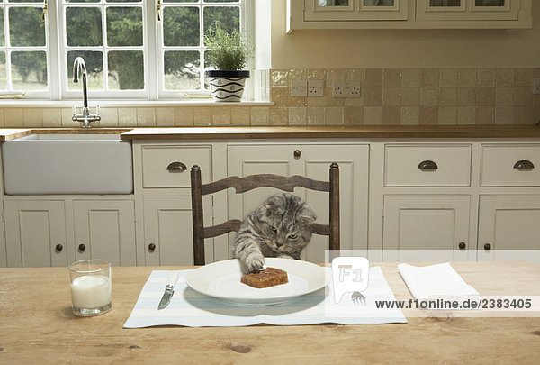 Eine Katze beim Essen am Tisch