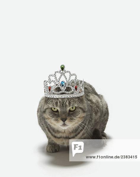 Katze mit Diadem