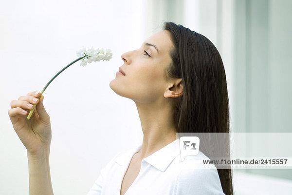 Frau riecht Blume  Kopf zurück  Seitenansicht Frau riecht Blume, Kopf zurück, Seitenansicht