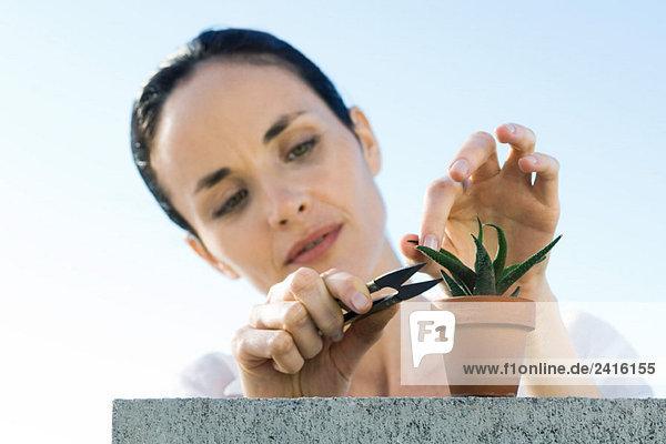 Frau Pruning Getopfte Pflanzen