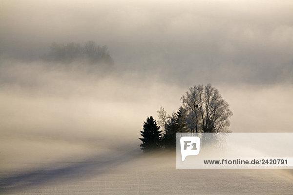 Germany  Bavaria  Murnau  Misty landscape Germany, Bavaria, Murnau, Misty landscape