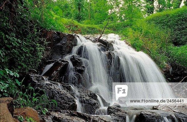Ein Wasserfall während des Monsuns Ratnagiri  Maharashtra  Indien