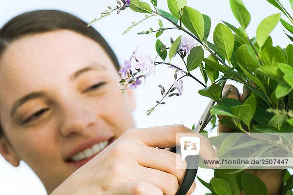 Junge Frau Abschneiden Sprig der Blumen Junge Frau Abschneiden Sprig der Blumen
