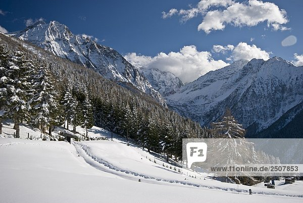 Italien  Lombardei  Naturpark Adamello  Wald mit Schnee bedeckt.
