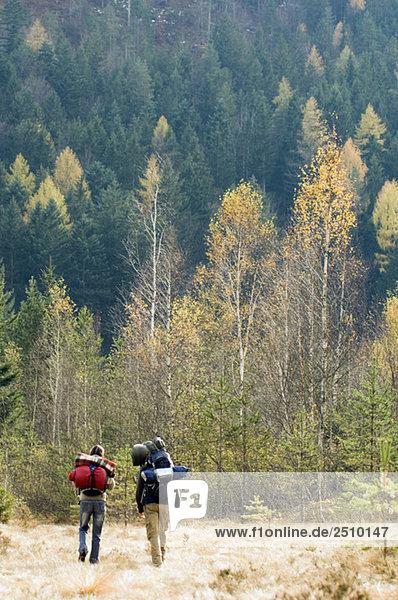 Österreich  Salzburger Land  Junges Paar Wandern  Rückansicht