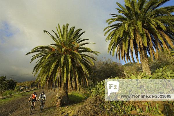Fahrradfahrer unter Palmen  fully_released