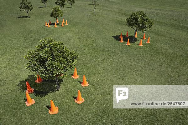 Verkehr Blütenzapfen umliegende kleine Bäumen