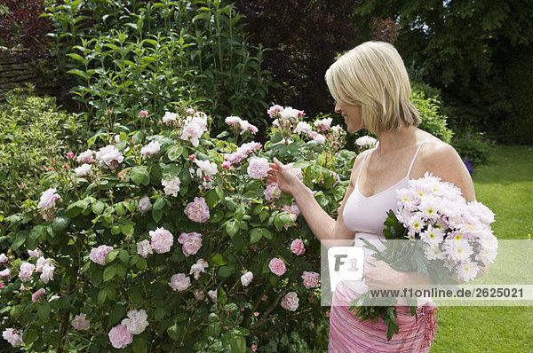 Frau betrachtet Rosen im Garten