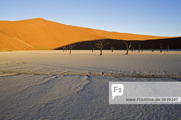 Afrika  Namibia  Tote Bäume in der Wüste