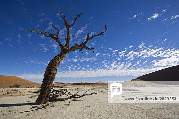 Afrika  Namibia  Deadvlei  Tote Bäume in der Wüste