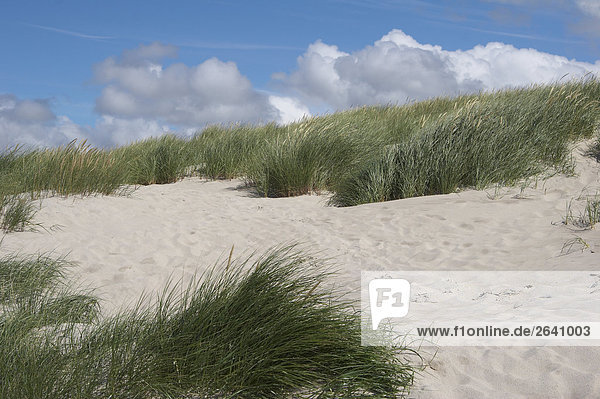 Dünenlandschaft in Dänemark