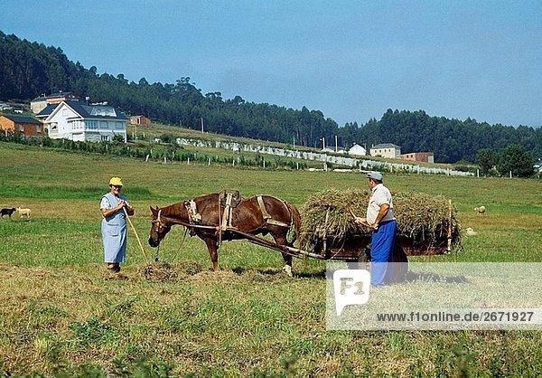 Paar Landwirte arbeiten in dem Land  Lugo Provinz  Galicien  Spanien