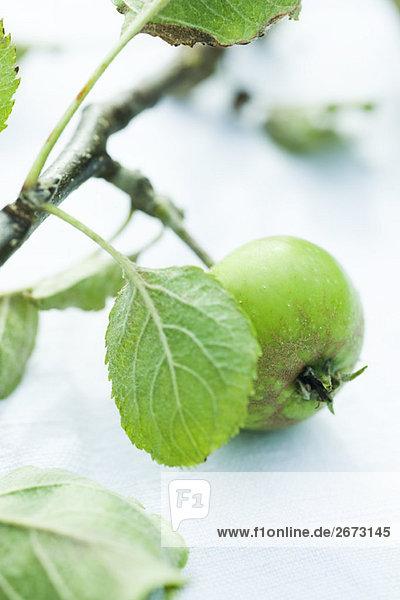 Organische Apple auf Zweig