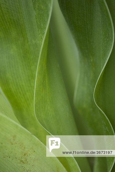 Green foliage  close-up