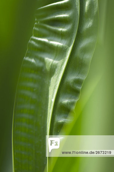 Wrinkled leaves  close-up