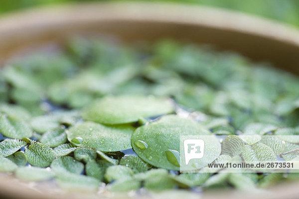 Wasser Pflanzenblatt Pflanzenblätter Blatt fließen Detail Details Ausschnitt Ausschnitte