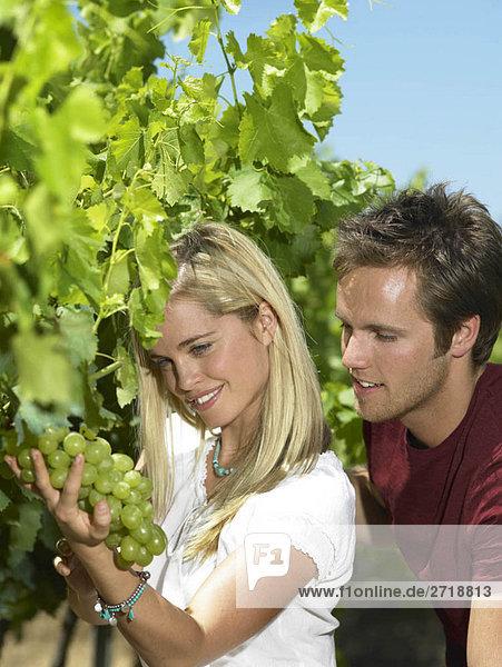 Frau beim Betrachten von Trauben am Weinstock