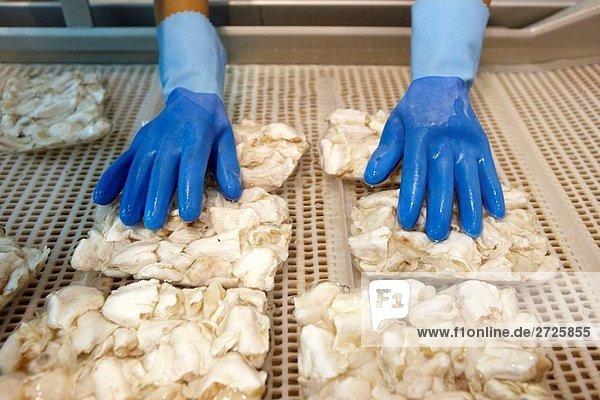 Manipulation von Stockfisch mit kaltem Wasser vor dem Einfrieren  gekühlte und gefrorene Stockfisch Verteilung