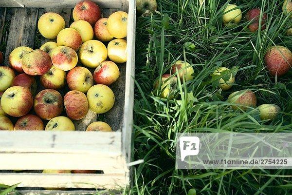 Äpfel in Kiste