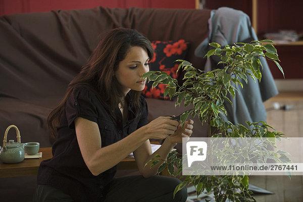 Junge Frau beim Beschneiden von Topf-Ficus