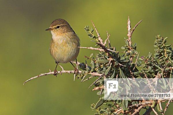 Nahaufnahme der Vogel hocken auf Zweig