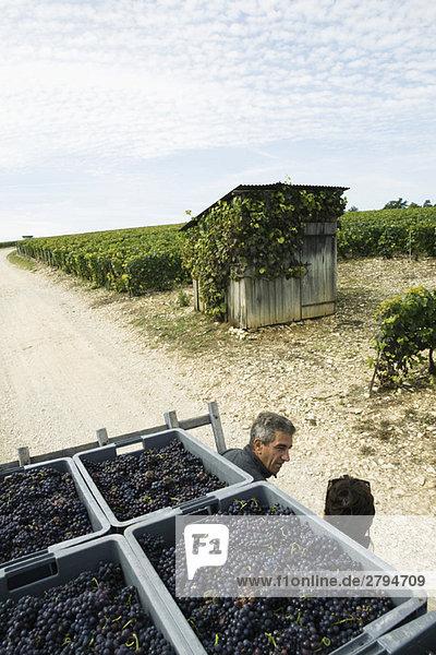 Frankreich  Champagne-Ardenne  Aube  Arbeiter plaudern im Weinberg  Kisten voller Trauben im Vordergrund