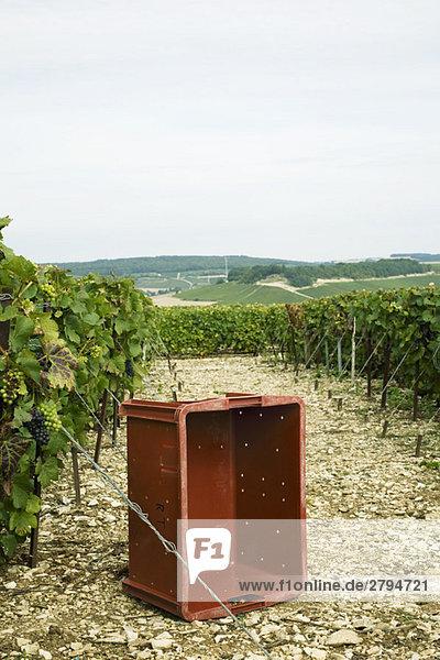 Frankreich  Champagne-Ardenne  Aube  leere Kiste im Weinberg