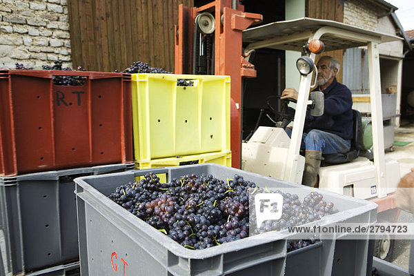 Frankreich  Champagne-Ardenne  Aube  Gabelstapler mit Kisten voller Trauben