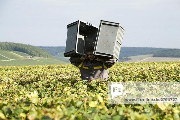 Frankreich  Champagne-Ardenne  Aube  Mann mit Plastikbehältern im Weinberg