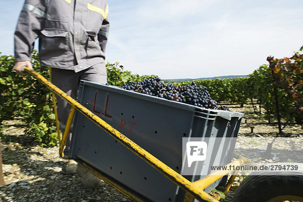 Frankreich,  Champagne-Ardenne,  Aube,  Arbeiter beim Kistentransport im Weinberg