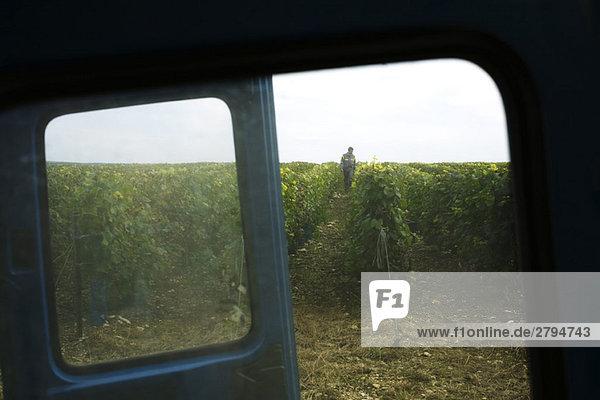 Frankreich  Champagne-Ardenne  Aube  Weinberg durch LKW-Fenster gesehen