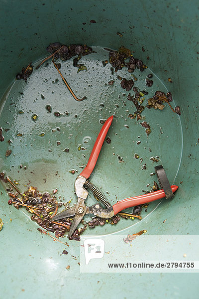 Pruning shears in bottom of dirty bucket
