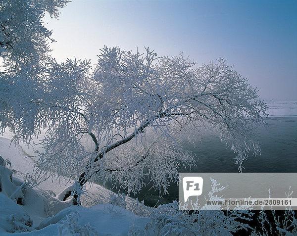 Schneebedeckten Bäume auf der Piste