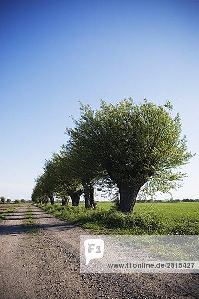 Bäume entlang einer Landstraße Schweden.