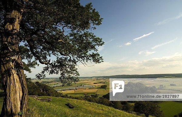 Panoramablick auf kultiviertem Land  Amoeneburg  Landkreis Marburg-Biedenkopf  Hessen  Deutschland