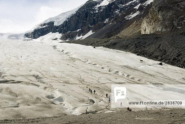 Menschen Klettern auf der Columbia Eisfeldern gebären  Jasper-Nationalpark  Alberta  Kanada.