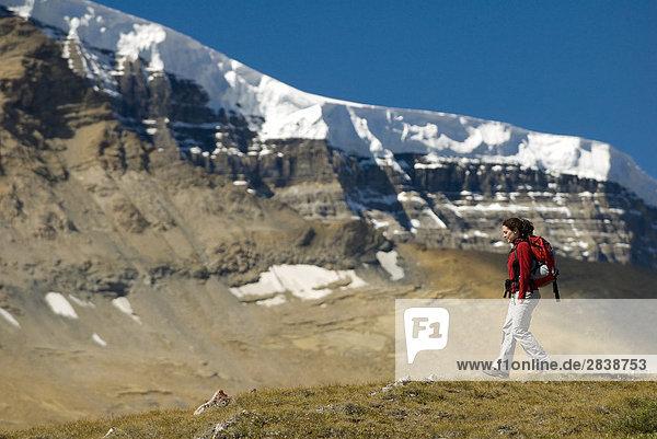 Frau Wandern am Wilcox Pass mit Snowdome im Hintergrund  Jasper-Nationalpark in Alberta  Kanada.