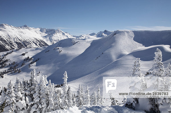 Whistler Mountain  Whistler  British Columbia  Kanada.