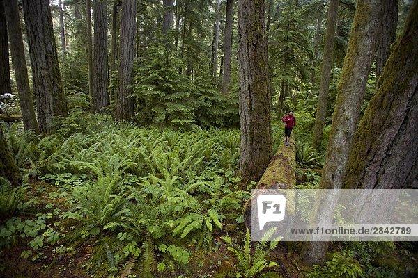 Eine junge Frau Trail-Läufer unter Riesenzedern in Cathedral Grove Provincial Park  Vancouver Island  British Columbia  Kanada