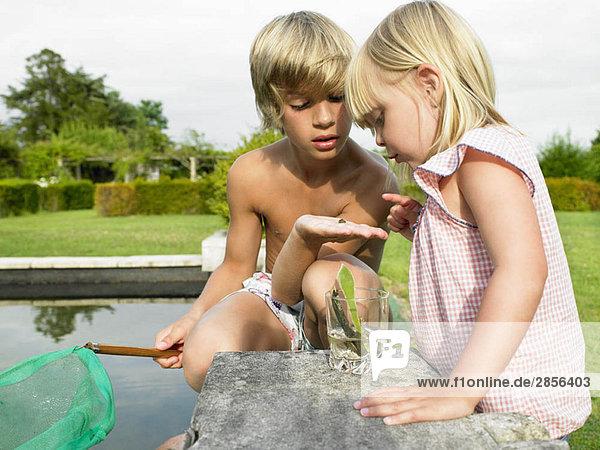 Kinder schauen Frösche an