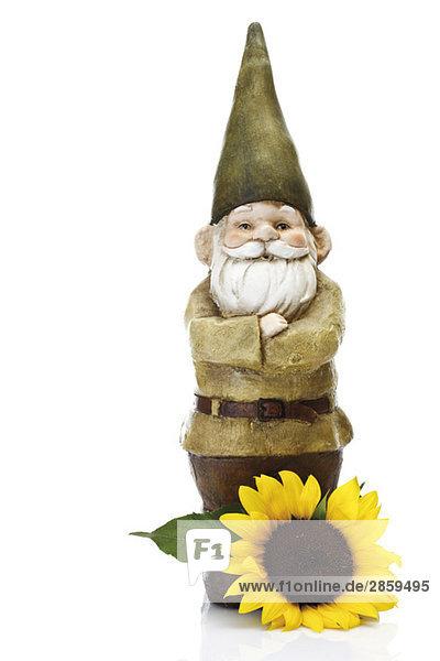 Gartenzwerg und Sonnenblume