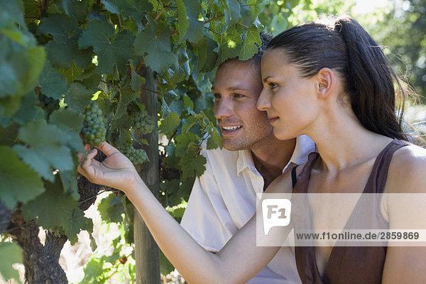 Junges Paar beim Betrachten der Weinrebe  Nahaufnahme