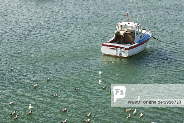 Möwenherde im Meer ruhend  kleines Boot in der Nähe verankert