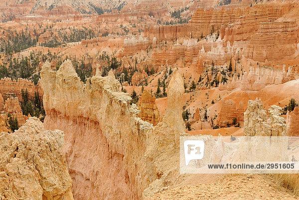 Kalksteinformationen  sog. Hoodoos  Bryce Canyon Nationalpark  Utah  USA