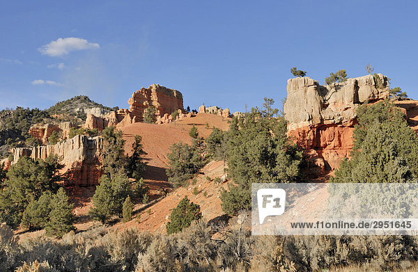 Felsformationen im Red Canyon  Dixie National Forest  Utah  USA