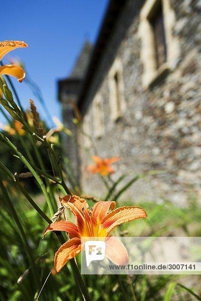 Frankreich Blume blühen Palast Schloß Schlösser Dordogne alt