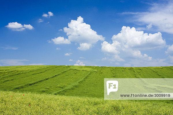 Felder bei Cejkovice  Süd-Böhmen  Tschechische Republik  Europa